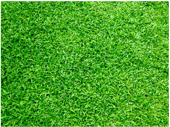 Easy Garden Hacks For The Perfect Lawn