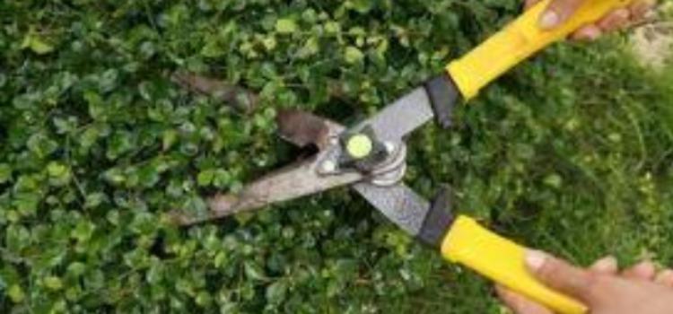 How Marietta Trims its Trees
